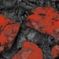 Veste Omer Red Stone 7mm